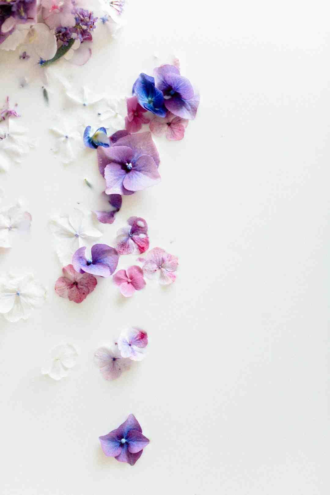 Où planter un jasmin étoilé ?