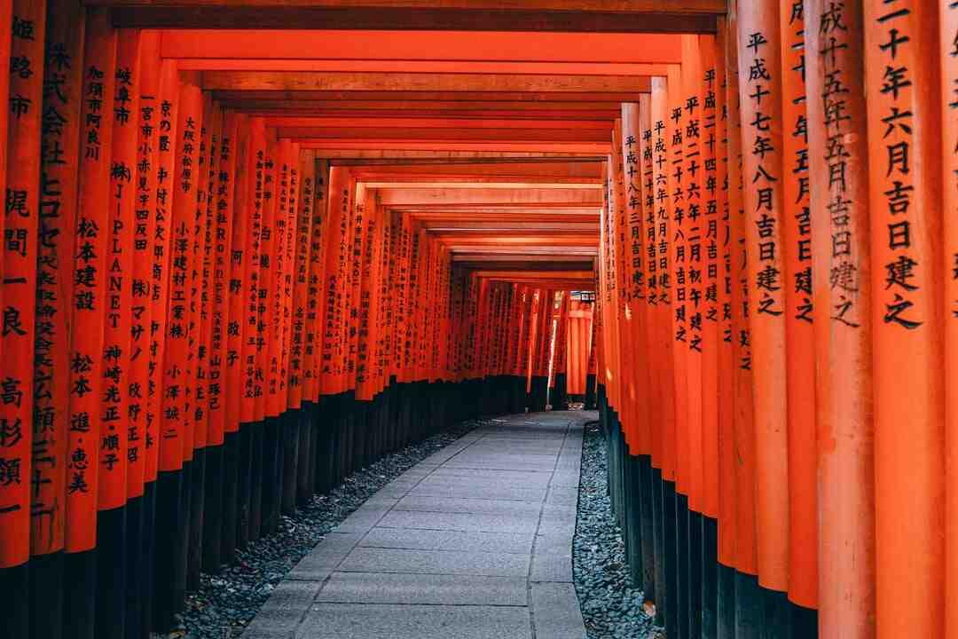 Cognassier du japon hauteur