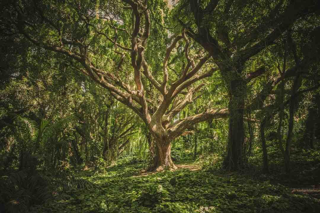 Comment faire arbre généalogique