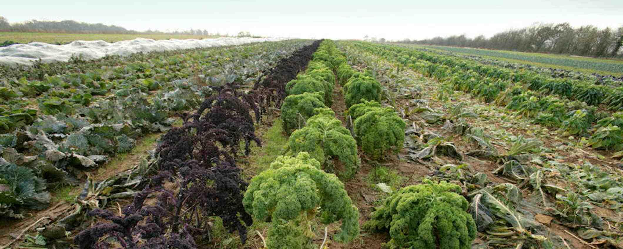 Comment Peut-on définir l'agriculture ?